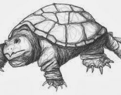 snapping_turtle_drawing